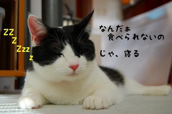 c0181639_036749.jpg