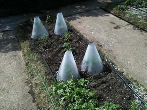 midorium garden !!_b0188548_0252039.jpg