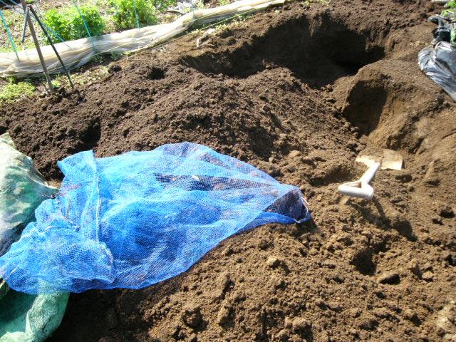 忙しいは心を亡くす・・去年里芋を埋けた場所にトマトの畝作ってしまった!_c0222448_11552089.jpg
