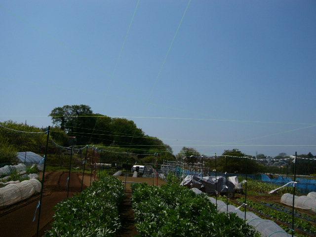 忙しいは心を亡くす・・去年里芋を埋けた場所にトマトの畝作ってしまった!_c0222448_1155521.jpg