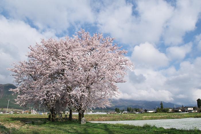 桜仙峡・池田町(陸郷)_e0056449_19255198.jpg