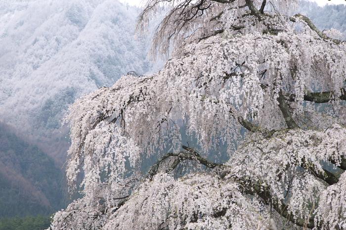 桜仙峡・池田町(陸郷)_e0056449_19283331.jpg