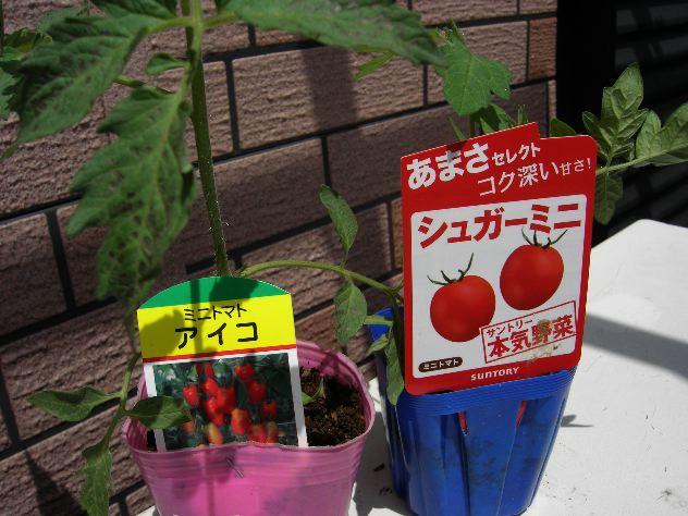 夏野菜の苗を入手しました_c0053863_14142423.jpg