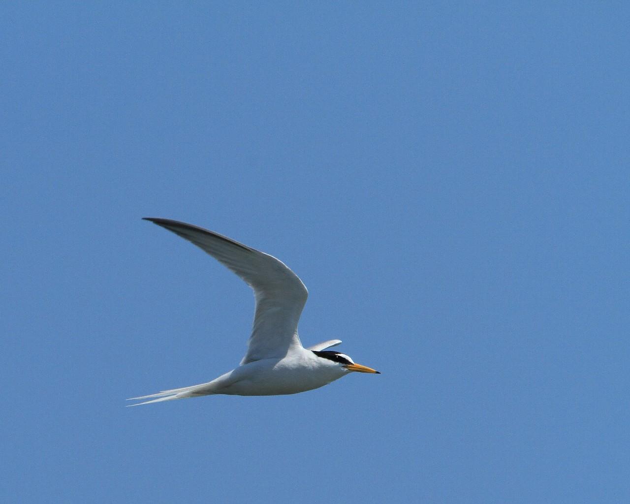 珍鳥には会えましたが、_f0105570_17143865.jpg
