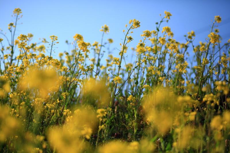 春の兆しの花々_f0075075_18181544.jpg