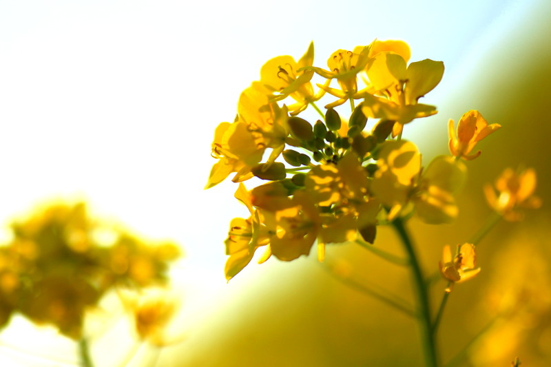 春の兆しの花々_f0075075_18183531.jpg