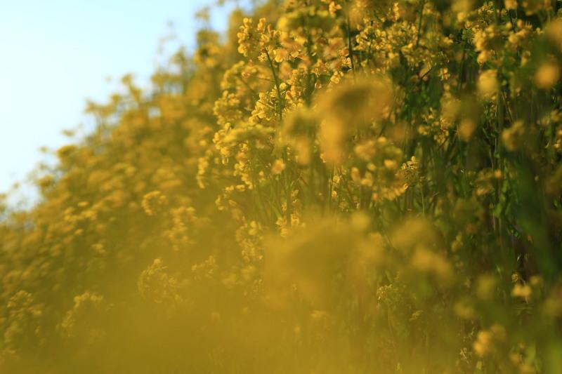 春の兆しの花々_f0075075_18185090.jpg