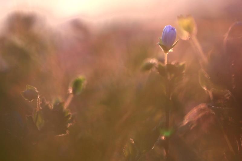 春の兆しの花々_f0075075_181925100.jpg