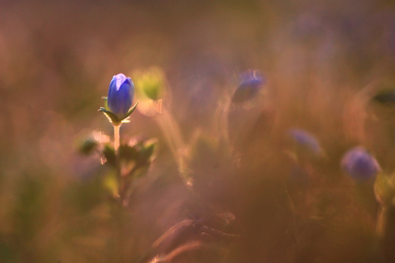 春の兆しの花々_f0075075_18193918.jpg