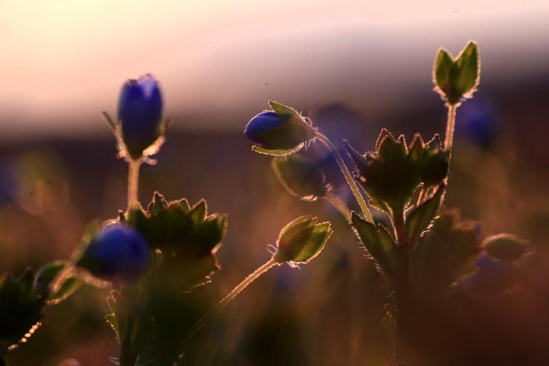 春の兆しの花々_f0075075_18195556.jpg