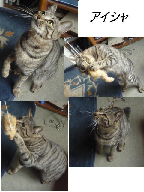 マタマタ猫じゃらし_b0112380_9285286.jpg