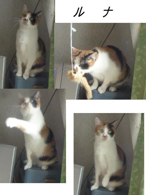 マタマタ猫じゃらし_b0112380_931213.jpg