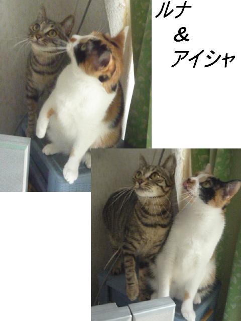 マタマタ猫じゃらし_b0112380_9322279.jpg