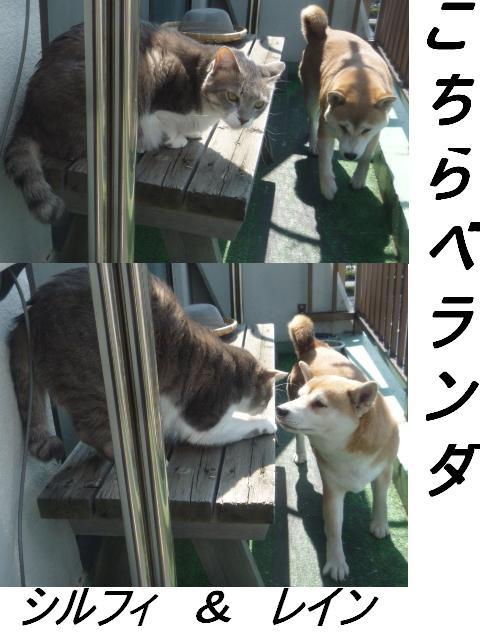 マタマタ猫じゃらし_b0112380_9344628.jpg