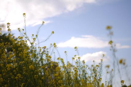 黄色い河_c0229485_181652.jpg