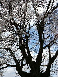 春が来ました_b0103889_14125675.jpg