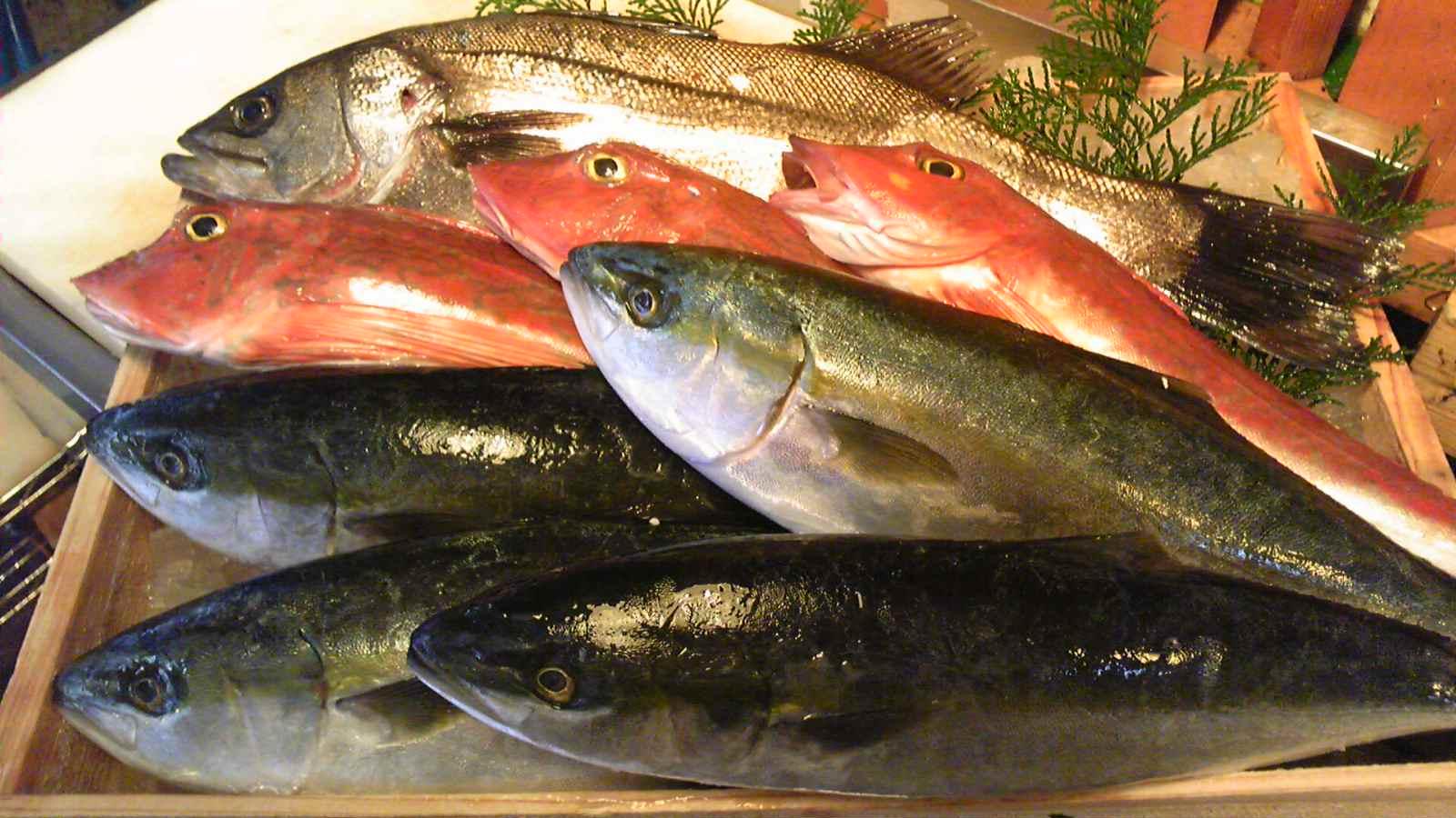 今日の魚たち_e0183396_020749.jpg