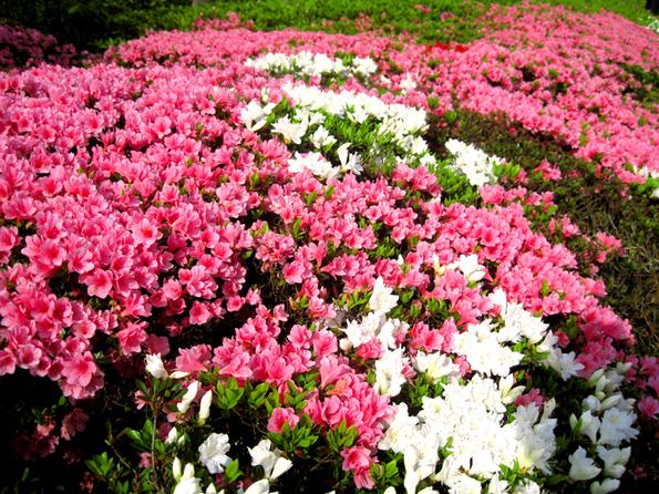 やっと来た春_b0083801_19483142.jpg