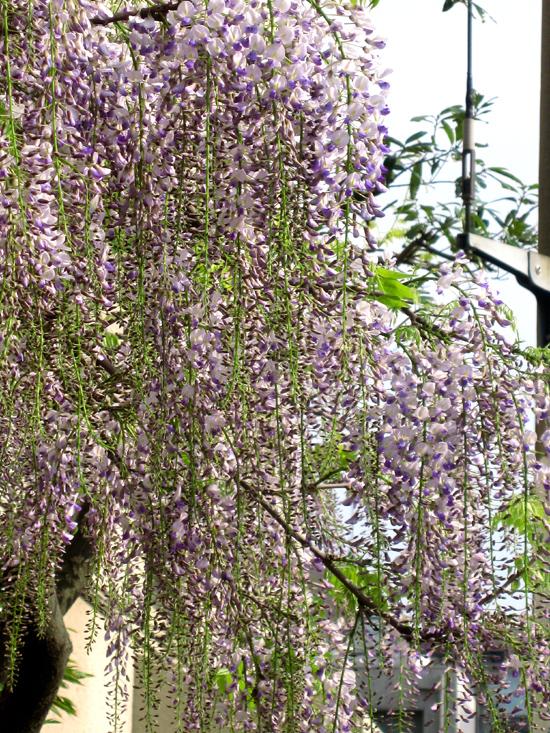 やっと来た春_b0083801_19503188.jpg