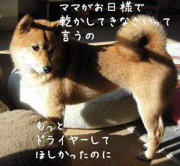 f0068501_14765.jpg
