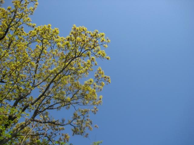 b0093221_0243833.jpg