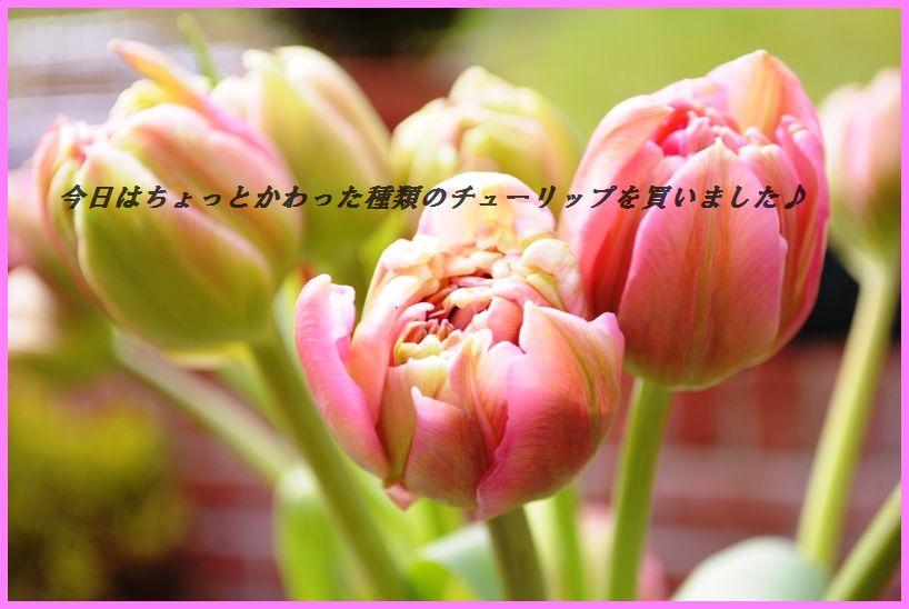 d0104926_1393186.jpg