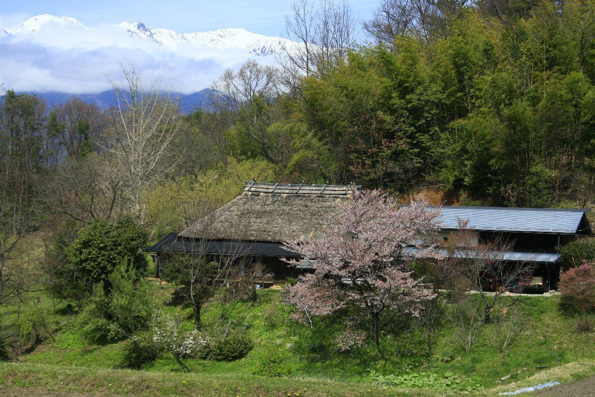 巨桜の花の梢 _c0104227_72384.jpg