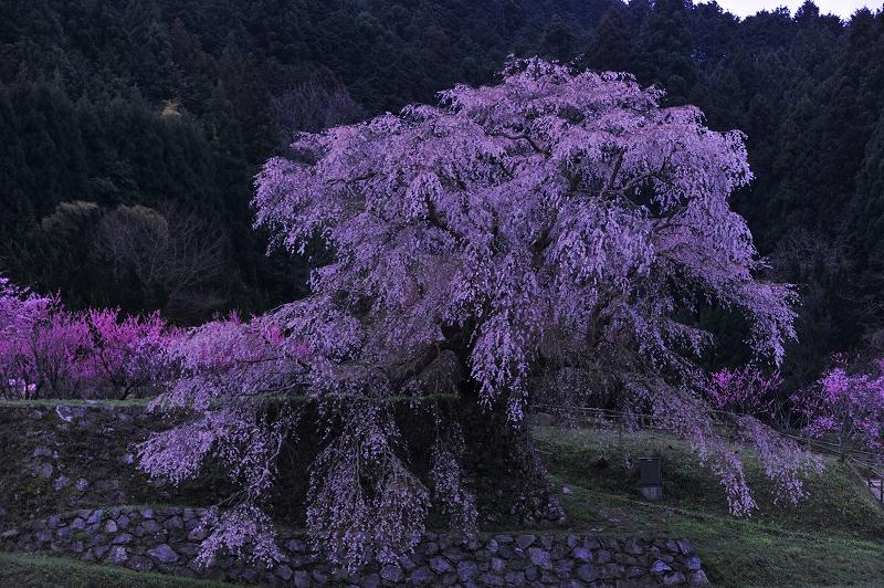 桜時間_f0050534_19464313.jpg