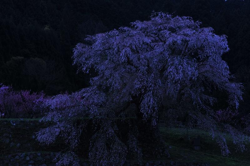 桜時間_f0050534_194712.jpg