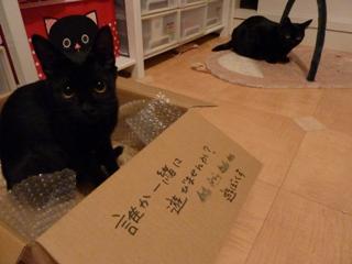 遊ぼっくす猫 のぇるろった編。_a0143140_21175934.jpg