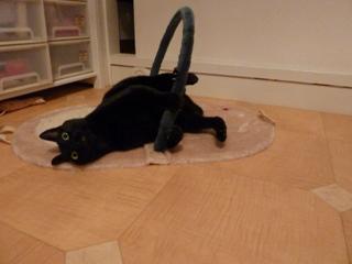遊ぼっくす猫 のぇるろった編。_a0143140_21205010.jpg
