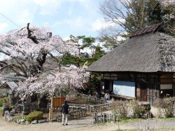 高森観音堂の桜_f0019247_852561.jpg