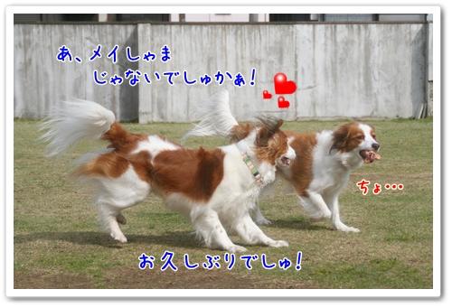 d0013149_1333881.jpg