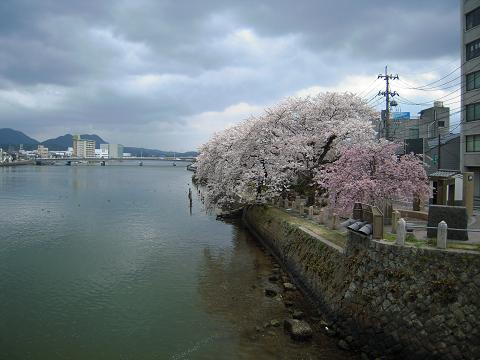 松江の[皆美館] ~西国桜旅⑤_b0050651_10515054.jpg