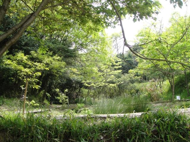 うみべの森散策_c0108460_15433169.jpg
