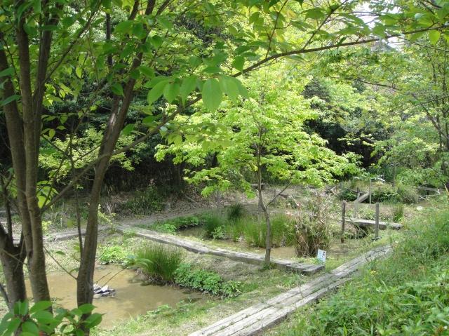 うみべの森散策_c0108460_15435666.jpg