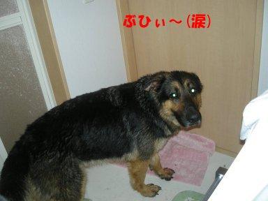 b0113663_11251085.jpg