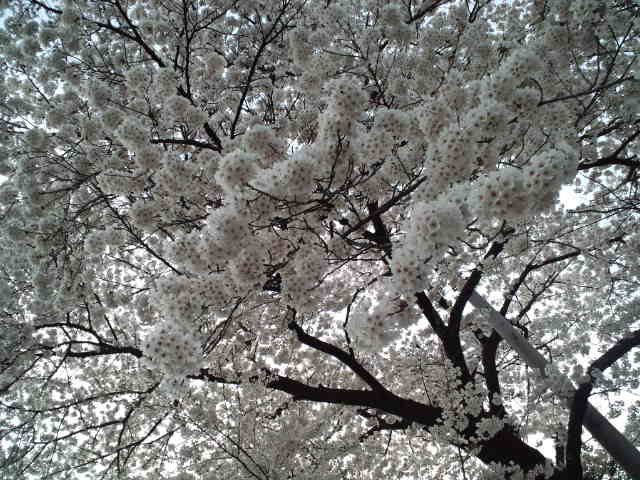 天神平☆_c0151965_20415067.jpg