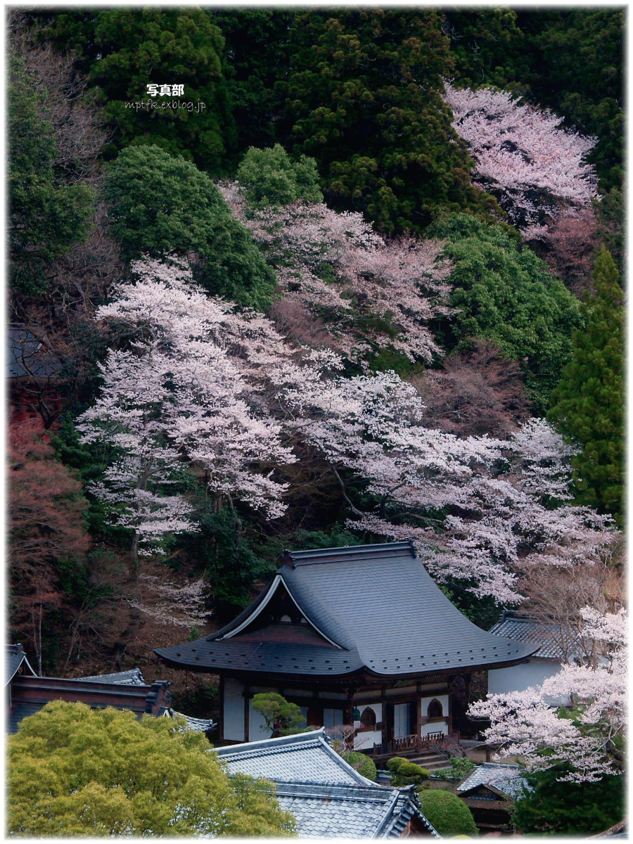 奈良 室生の里 桜_f0021869_132124.jpg