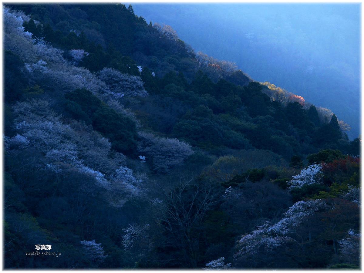 京都 嵐山 桜_f0021869_1351762.jpg