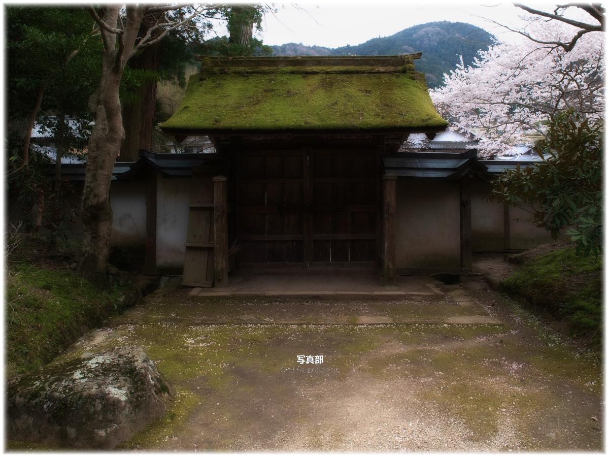 奈良 室生寺 桜_f0021869_22251590.jpg