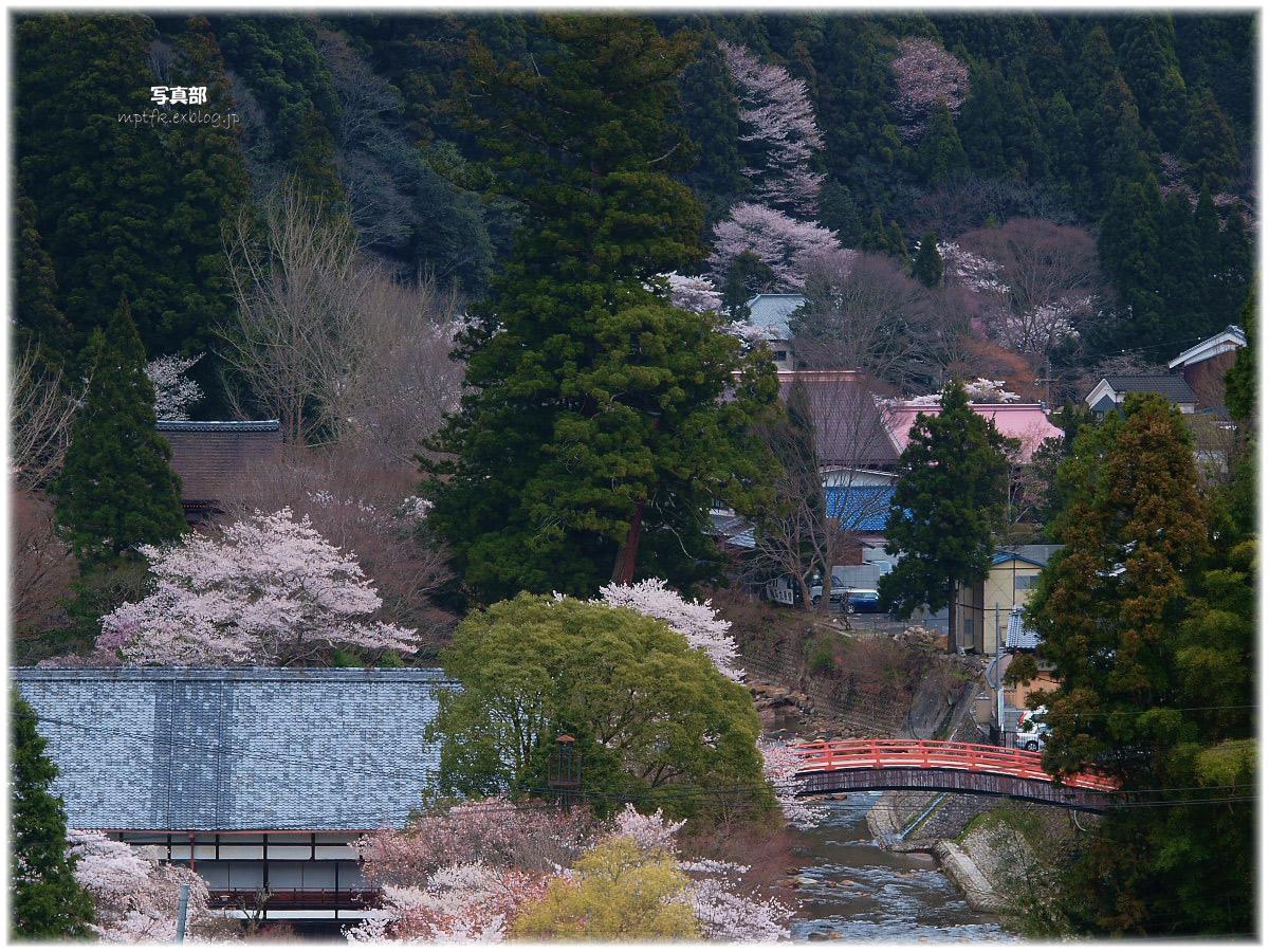 奈良 室生の里 桜_f0021869_22272810.jpg