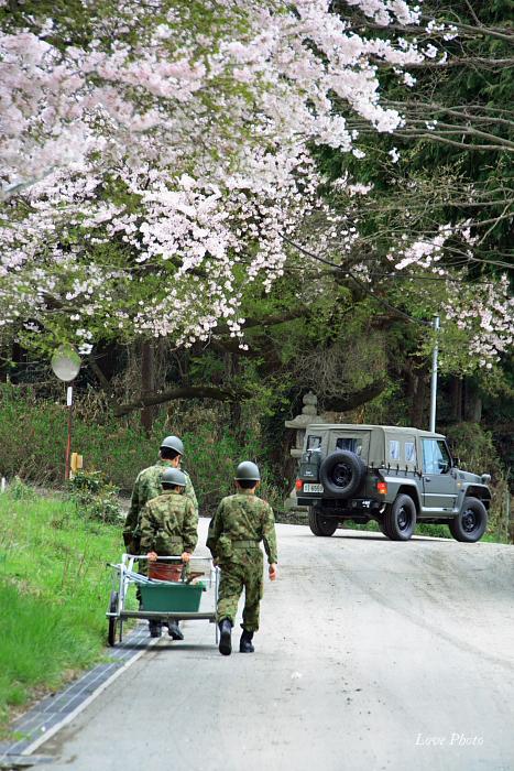 桜を求めて琵琶湖一周ドライブ ③_a0116472_010117.jpg