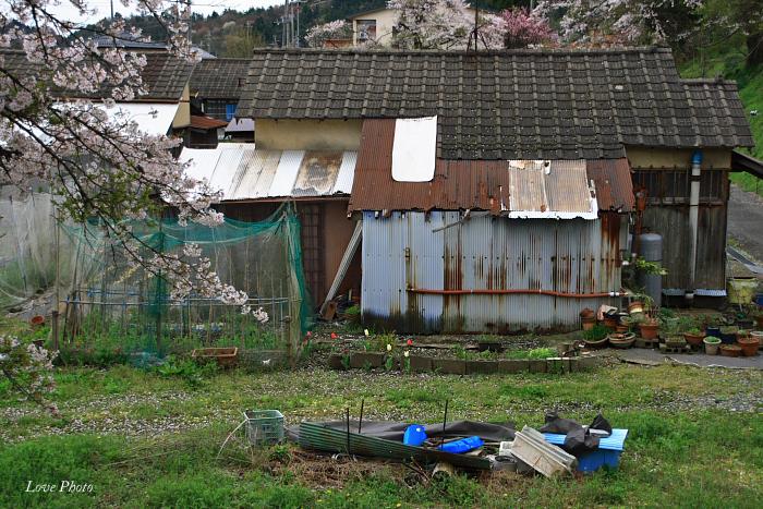 桜を求めて琵琶湖一周ドライブ ③_a0116472_092912.jpg