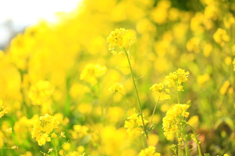 春の兆しの花々_f0075075_959474.jpg