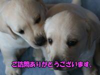 友達と我が家で楽しいBBQ!!(前編)_b0136683_15295323.jpg