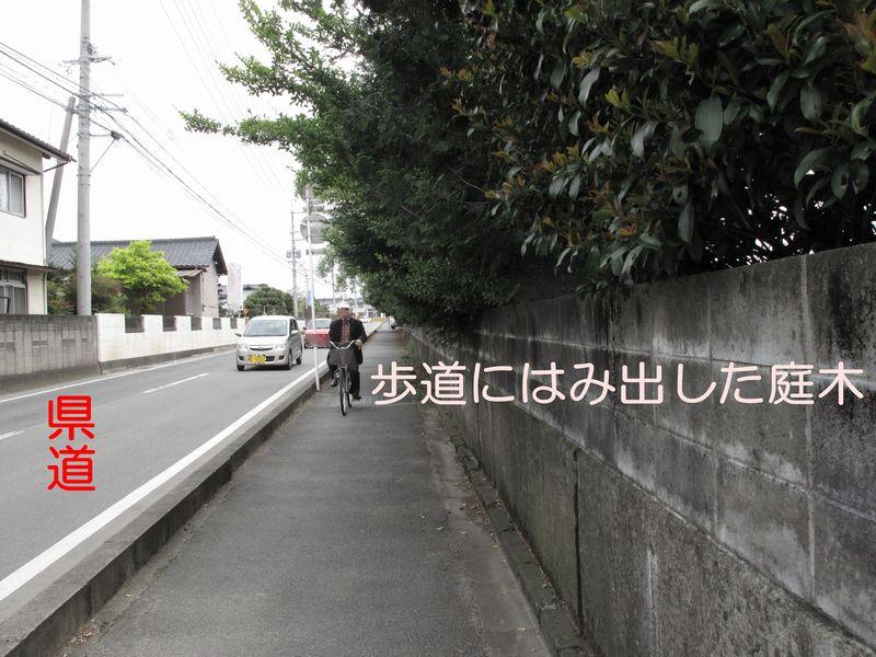 f0059498_1424503.jpg