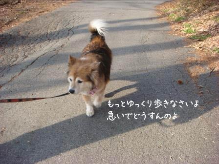 大集合(その3)_f0064906_1735431.jpg