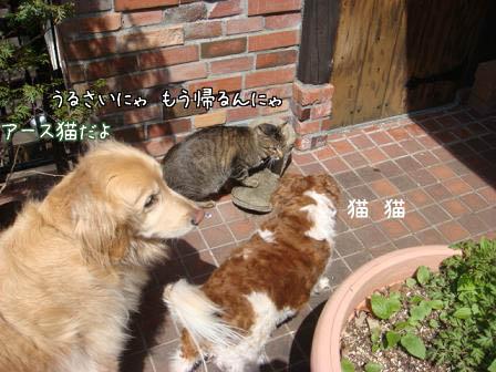 大集合(その3)_f0064906_17564061.jpg