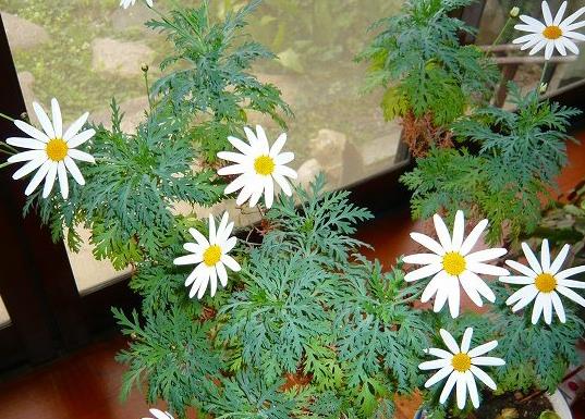 花の不思議_f0223914_20452656.jpg